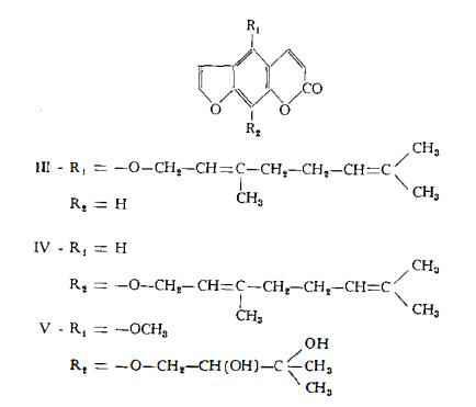 limone Figura 5