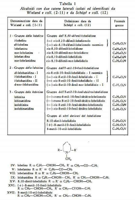lobelia Figura 4