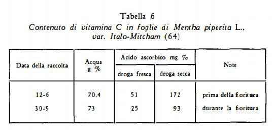 menta Figura 7