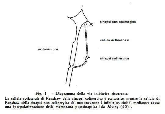 nocevomica Figura 4