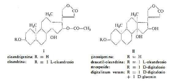 oleandro Figura 1