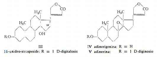 oleandro Figura 2