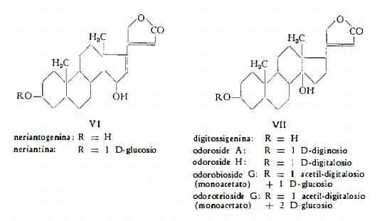oleandro Figura 3