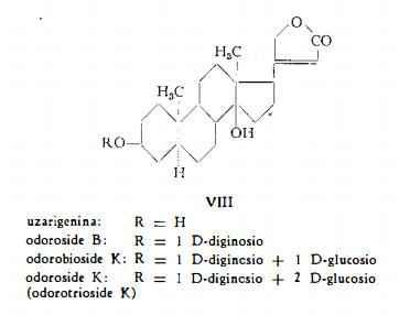 oleandro Figura 4
