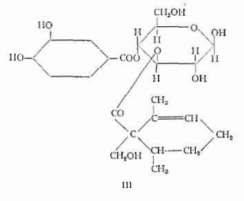 olivo Figura 3