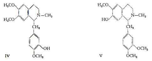 oppio Figura 4