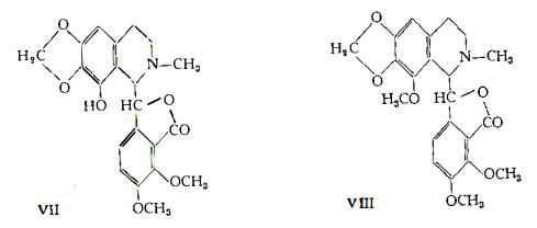 oppio Figura 6