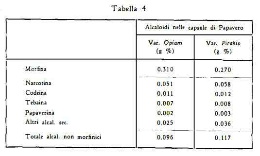 papavero Figura 4