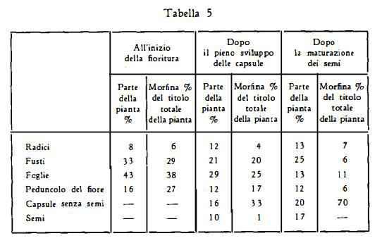 papavero Figura 5