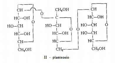 piantaggine Figura 2
