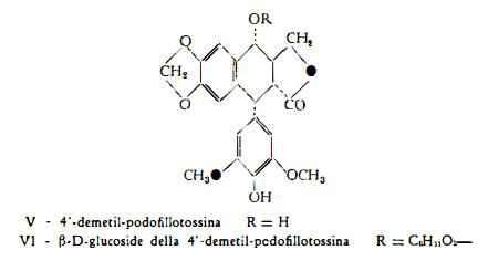 podofillo Figura 3