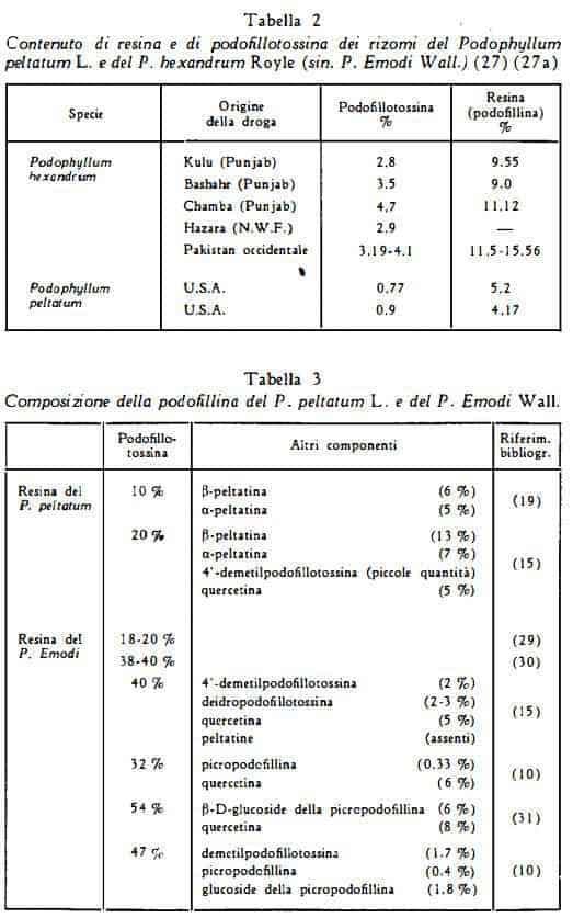 podofillo Figura 8