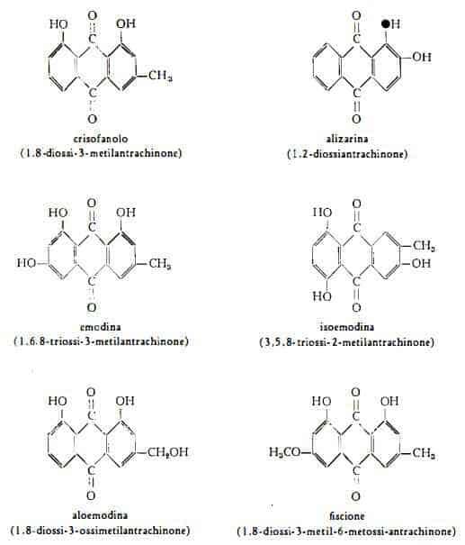 rabarbarocinese Figura 1