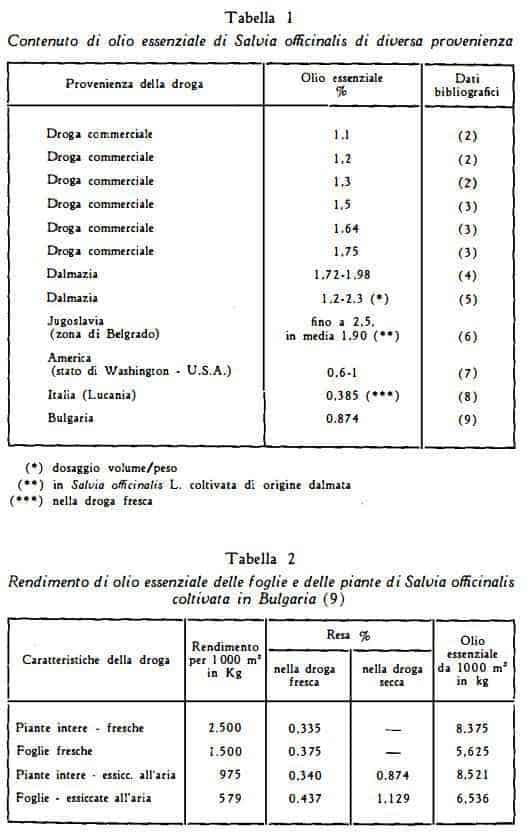 salvia Figura 1