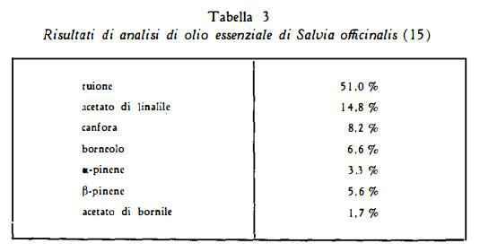 salvia Figura 3