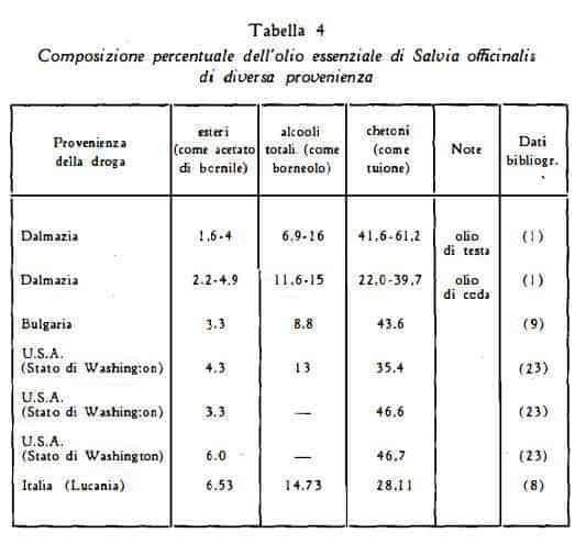 salvia Figura 4