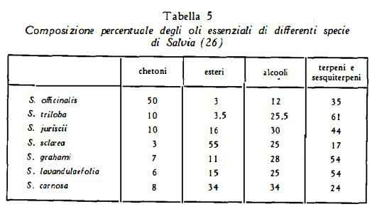 salvia Figura 5