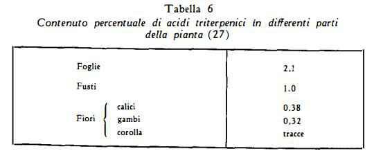 salvia Figura 6