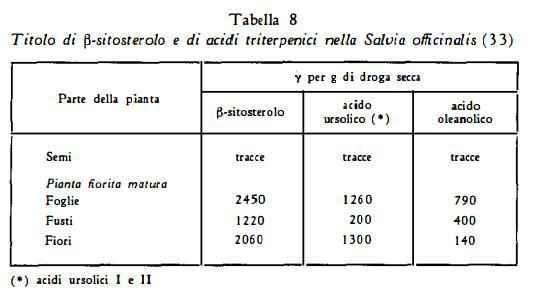 salvia Figura 8
