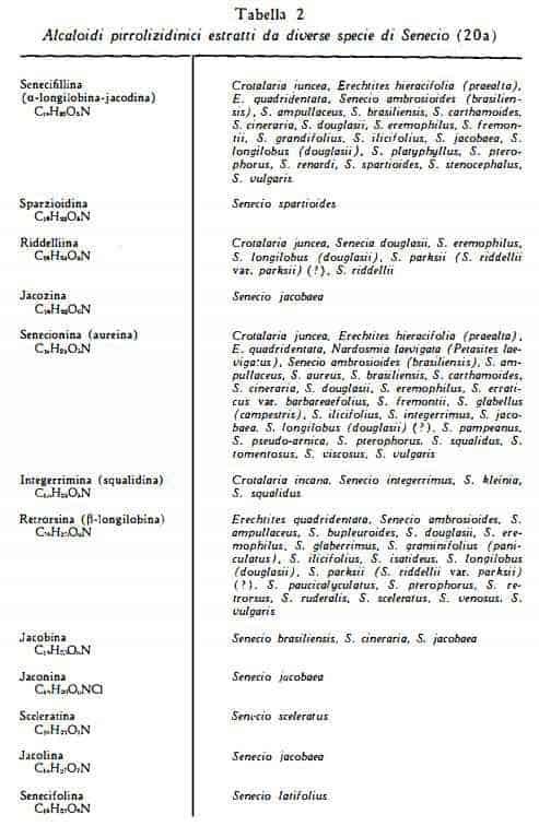 senecio Figura 2