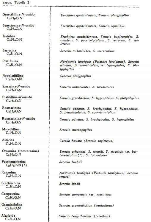 senecio Figura 3