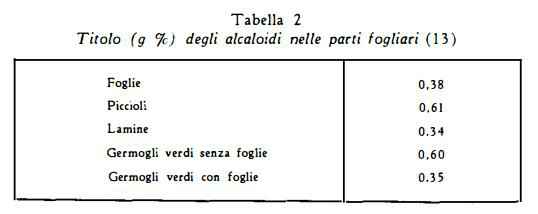 stramonio Figura 3