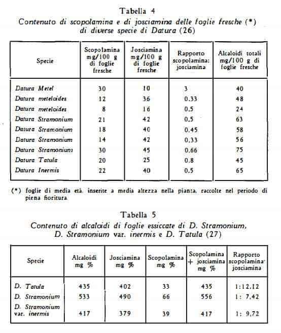stramonio Figura 5