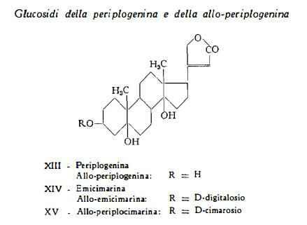 strofanto Figura 4