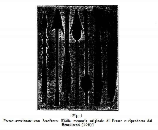 strofanto Figura 6