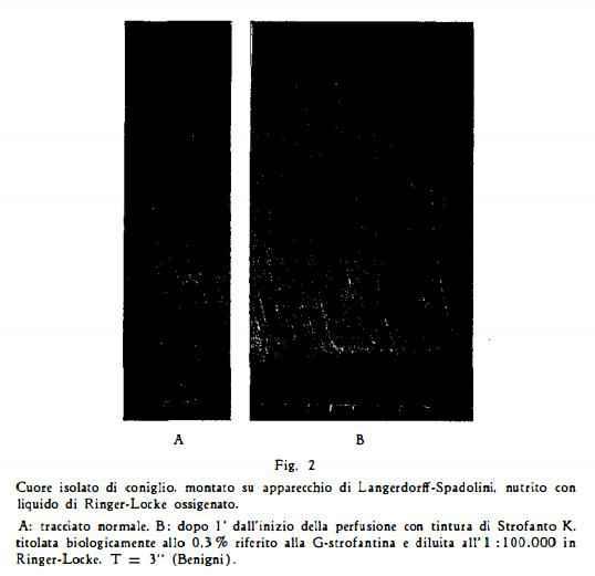 strofanto Figura 7