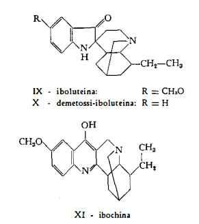 tabernanthe Figura 2