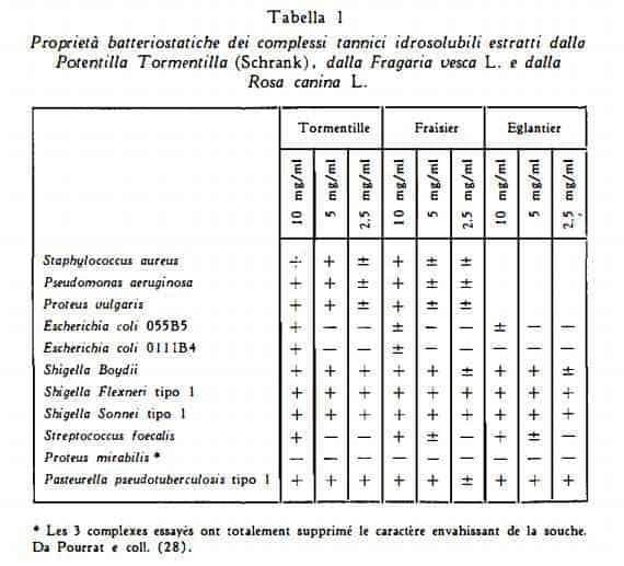 tormentilla Figura 2