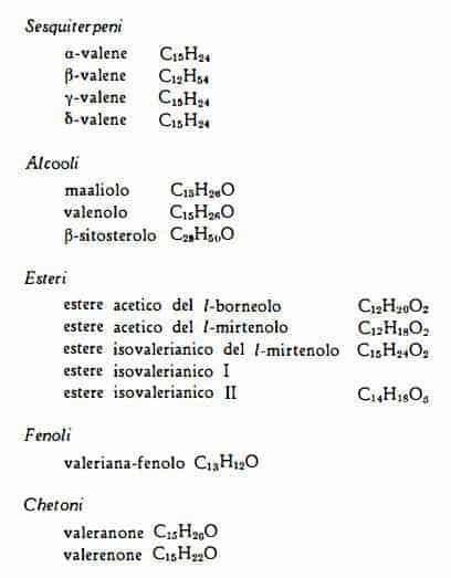 valeriana Figura 4