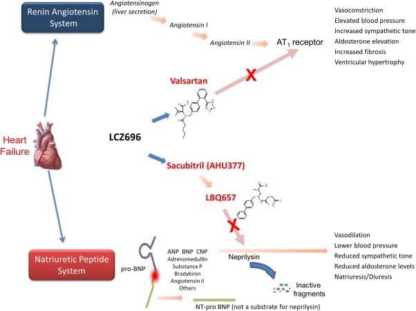 entresto (sacubitril-valsartan): meccanismo d'azione